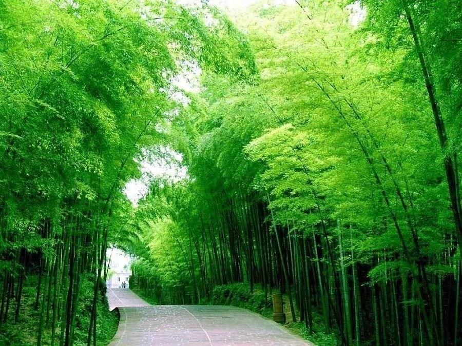天下银坑风景区是电影《夜宴》的取景处,竹林摇曳,风景秀丽