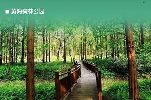 黄海森林公园1.jpg