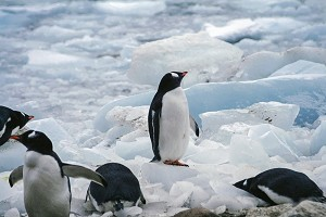 南极1.jpg