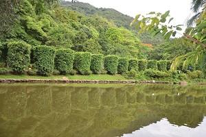 仙湖植物园2.jpg