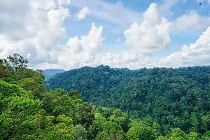 原始森林公园1.jpg
