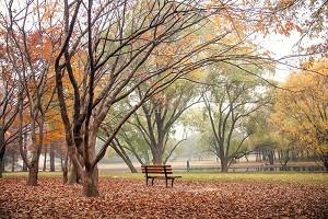 上海共青森林公园2.jpg