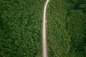 原始森林1.jpg