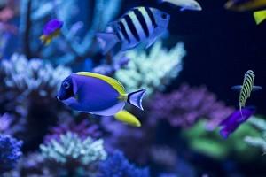 水下世界.jpg