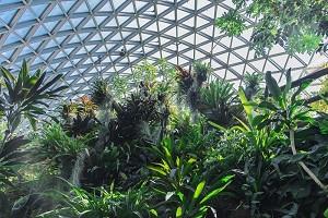 gd_兴隆热带植物园.jpg