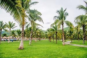 椰子岛.jpg