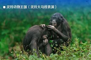 灵玲动物王国(灵玲大马戏表演)2.jpg
