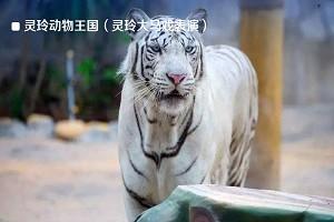 灵玲动物王国(灵玲大马戏表演)3.jpg