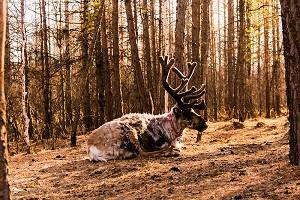 敖鲁古雅使鹿部落1.jpg