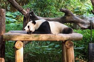 熊猫乐园1.jpg