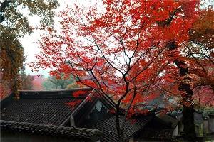 gd_天平山1.jpg
