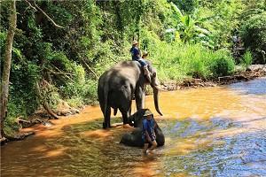 丛林骑大象.jpg
